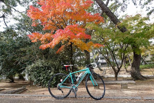 夙川公園で