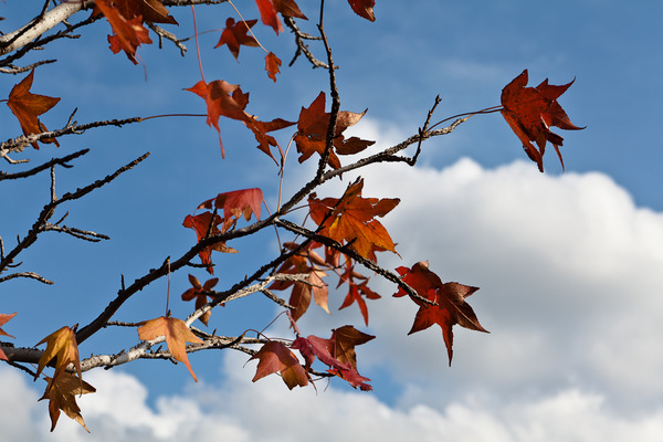 紅葉と青空と雲