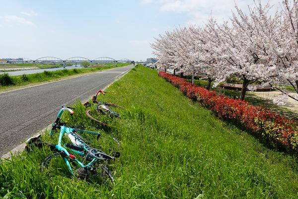 Sakura Road 2