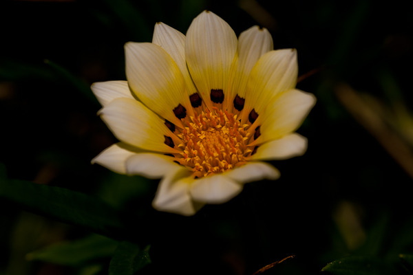 白い花1_LR3