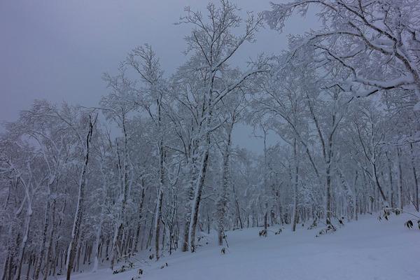スキーシーズン突入!