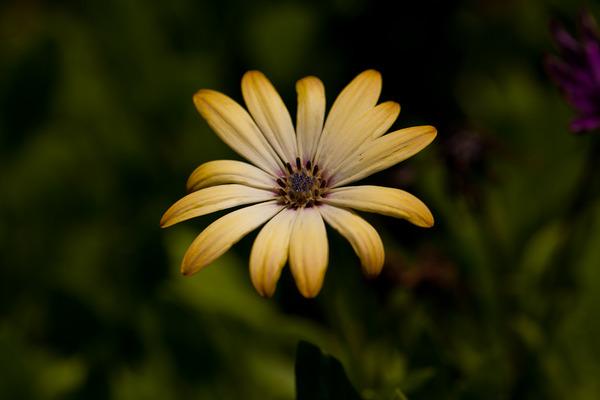 白い花2_LR3