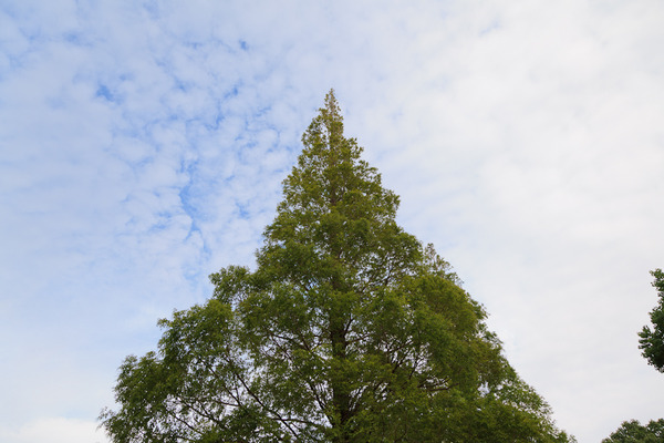 The Sky beyond a Tree_LR3