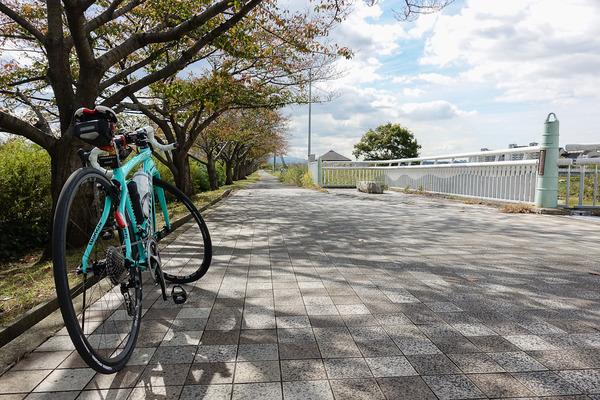 石川サイクル橋の桜並木で