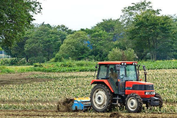 帯広での収穫の風景