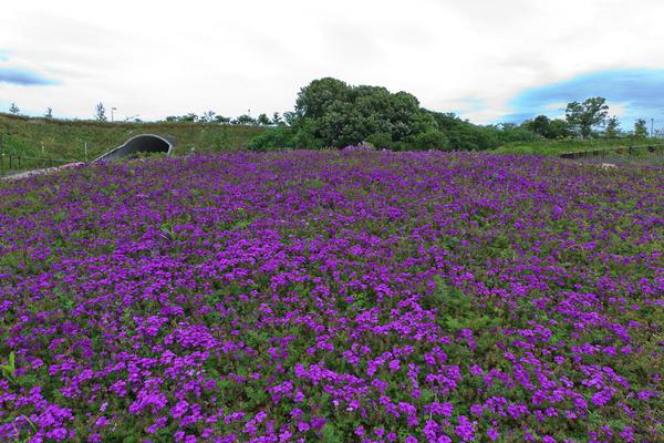 モリコロパークの花
