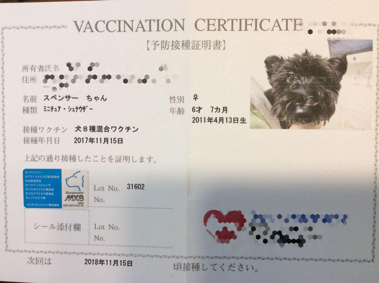 犬 混合 ワクチン