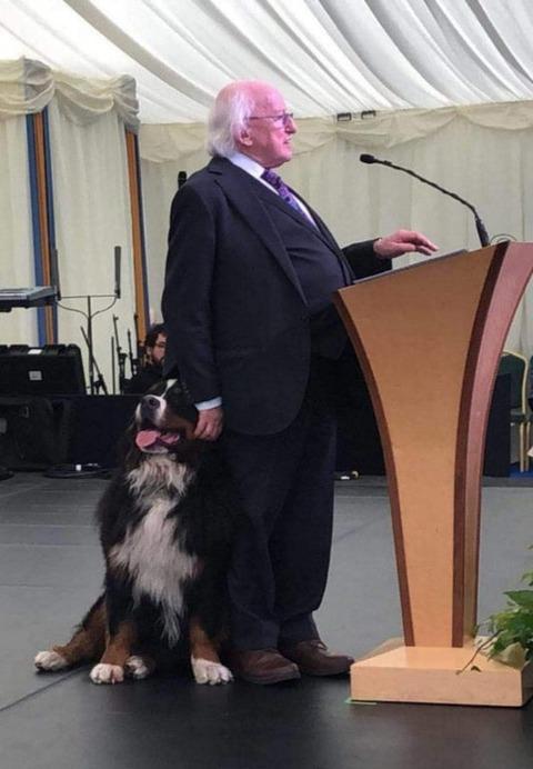 「アイルランド大統領は会見の場にも飼い犬を連れてきてる」海外の反応