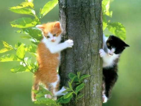 cat-climb-tree