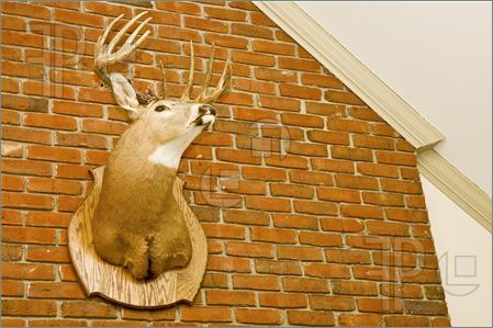 Deer-Head-Mounted-Brick-Wall-1119635