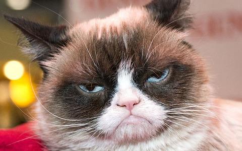 Grumpy_Cat_03_Freelargeimages-com