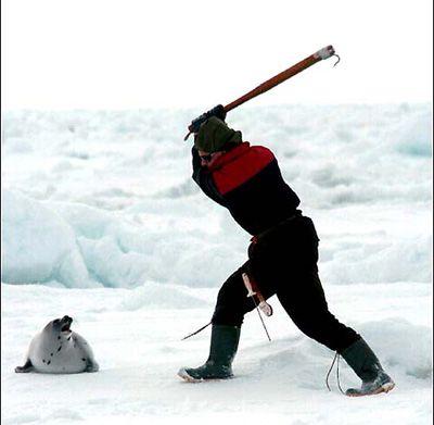 canada-seal-hunt_5106