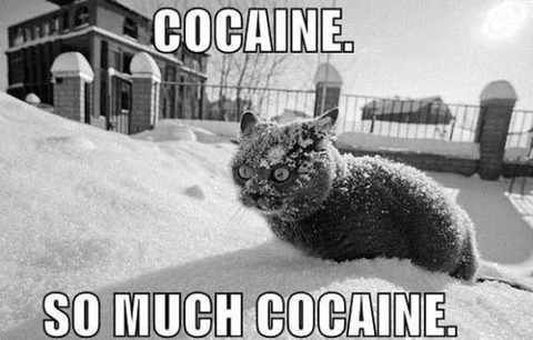 coke_cat_freak