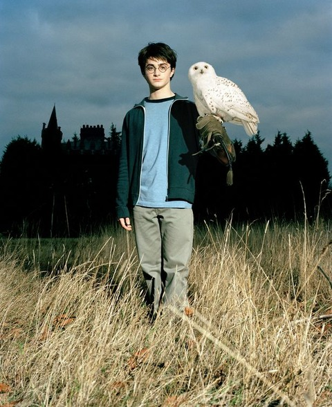 £££+RE+USAGE+FEE+APPLIES+Daniel+Radcliffe+as+Harry+Potter