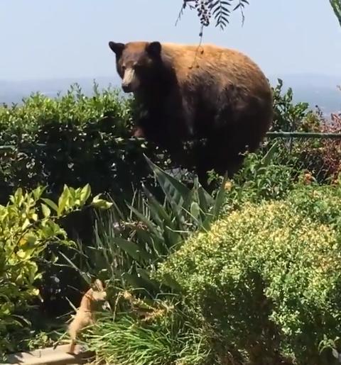 「人の庭に押し入ったクマさん。飼い犬に撃退され話題に」海外の反応