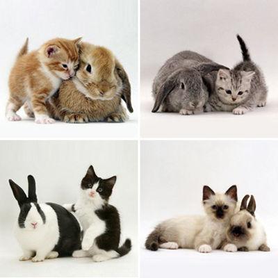 bunny-kitten-identity-theft