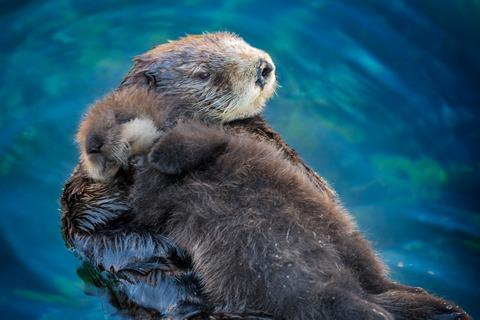 「くぅくぅ眠ってる動物は可愛い。超可愛い。」海外のまとめ
