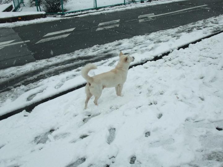 岡ミサンザイ 犬2 雪化粧 (大)