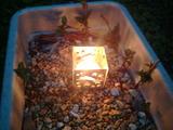 ヤマアジサイの挿し穂とキャンドル