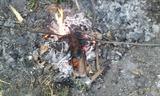 焚き火でタケノコ