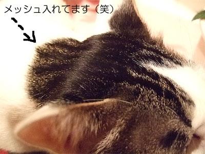 2008_01280023.jpg