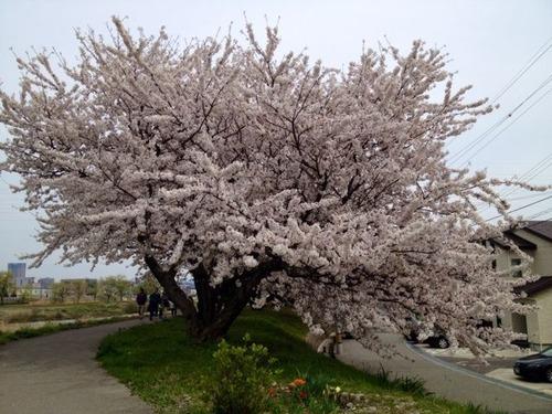 2014-04-13-13-55-20