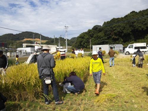 14稲刈り(1)
