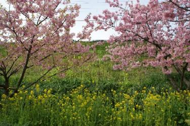 春の風の道で-11%