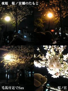 sakura_paul.jpg