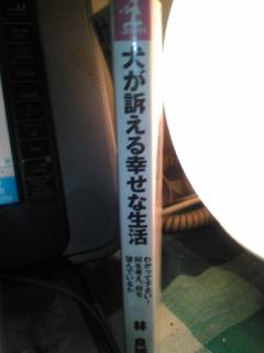 image11618uttae.jpg