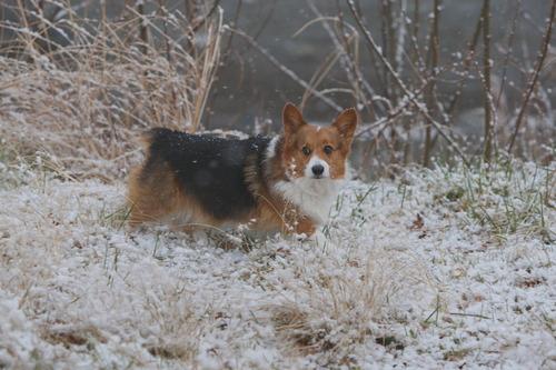 snow keisuke
