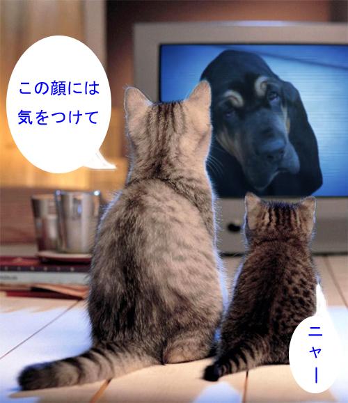 tv_edited-1.jpg