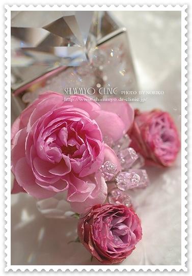 dsc_4002h_500cl_stamp.jpg