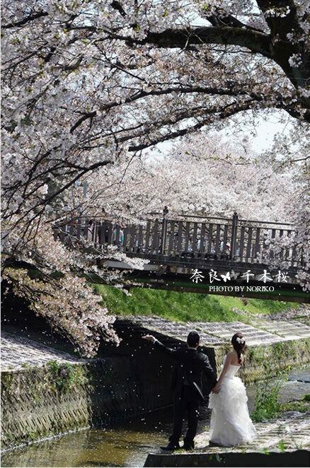 千本桜_LOVE