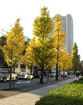 blog-midori.jpg
