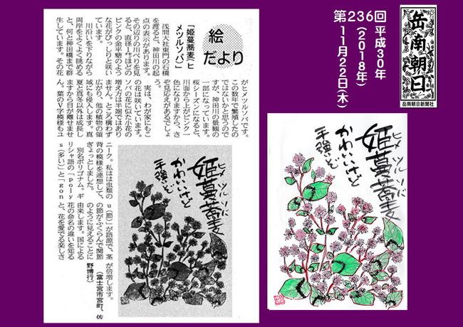 301122姫蔓蕎麦(岳南新聞)