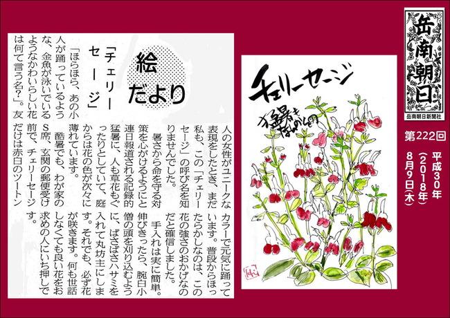 300809チェリーセージ(岳南新聞)