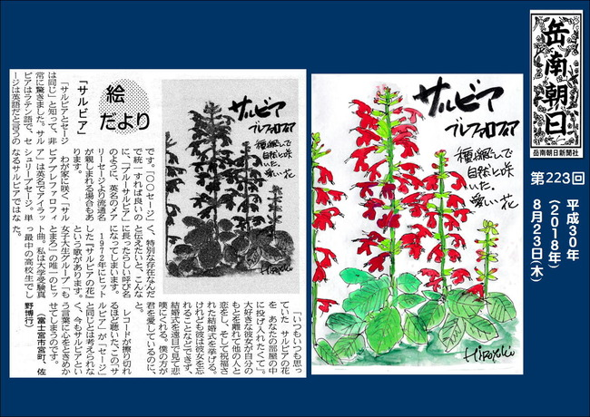 300823サルビア(岳南新聞)