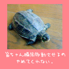 img20060614_1.jpg