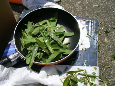 230327 笹茶