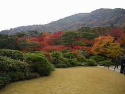 pachiwa-ku.jpg