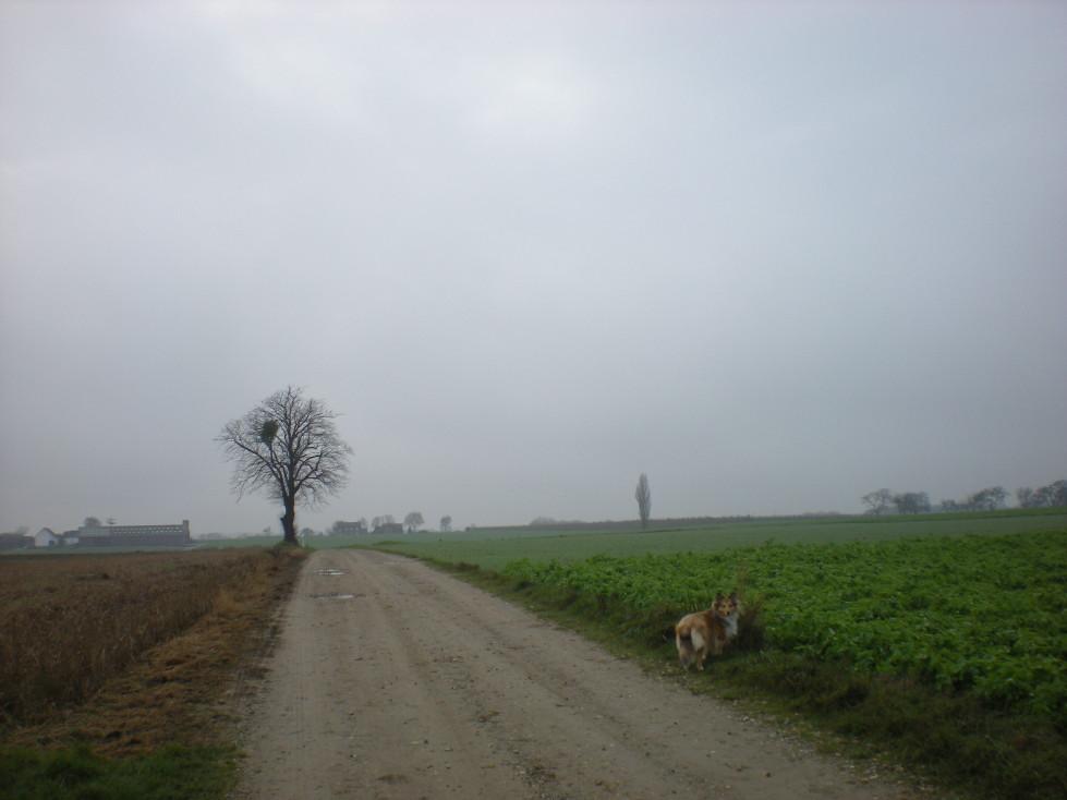 img20081128_4.jpg