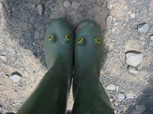 frogb.jpg