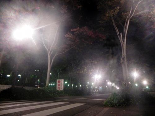 DSCN7481 夜の南港中