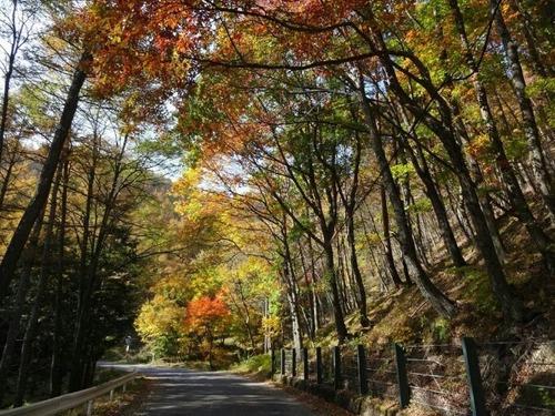 和田峠の秋