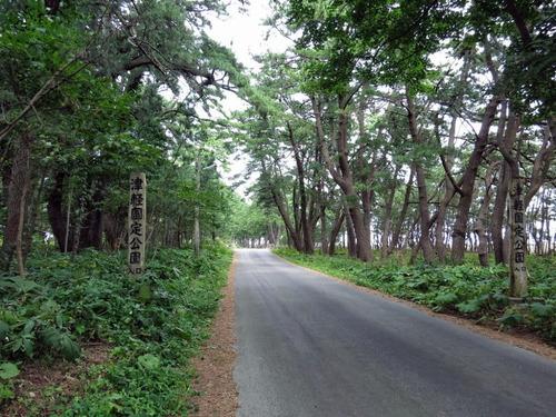 石崎平舘の松林