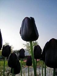 2008-04-20-3.jpg