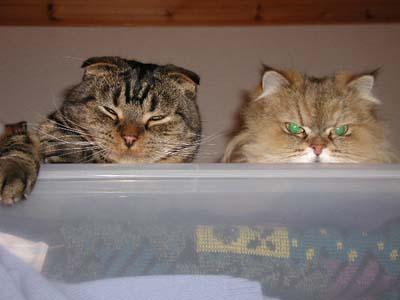 cats0421.jpg