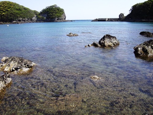 小稲湾 引き潮②