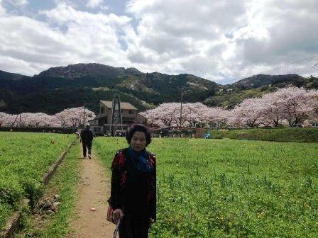 松崎 花畑